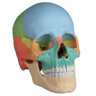 Czaszka osteopatyczna