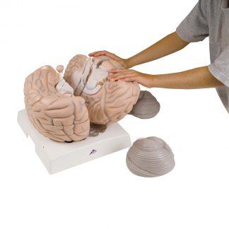 Duży model mózgu