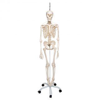 Funkcjonalny Szkielet Frank
