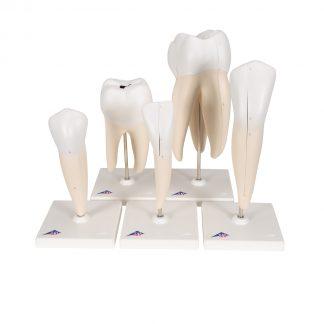 Klasyczne modele zębów