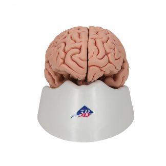 Mózg do czaszki