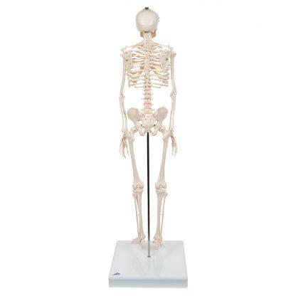 Mini szkielet Shorty