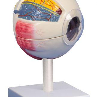Model oka 6 krotne powiększenie
