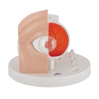 Model oka z patologiami