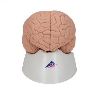 Podstawowy model mózgu
