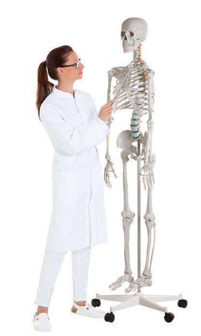 Szkielet Człowieka OSCAR_6