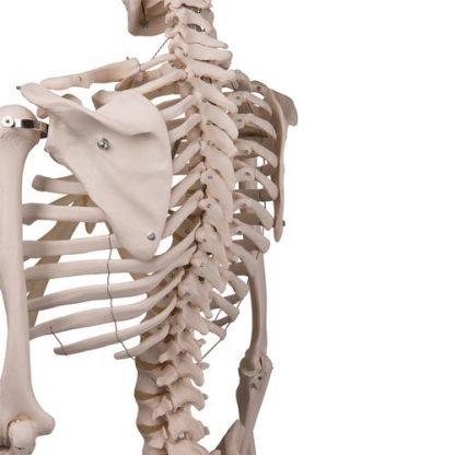 szkielet człowieka stan