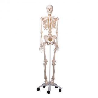 Szkielet elastyczny