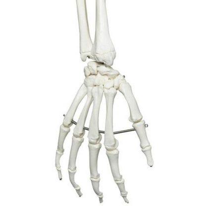Szkielet standardowy
