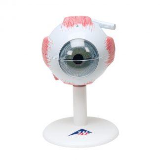 model oka 6 części
