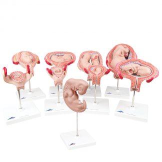 Ciąża 9 modeli