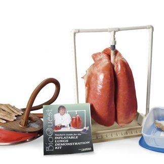 Demonstracyjny model płuc