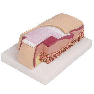 Model paznokcia