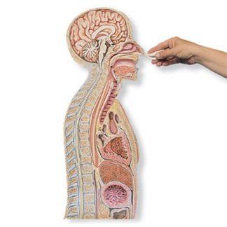 Zgłębnikowanie żołądka