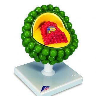 Model wirusa HIV
