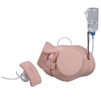 Symulator cewnikowania pęcherza obupłciowy