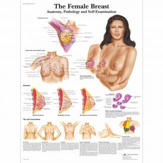 Anatomia piersi kobiet z patologiami i samobadaniem