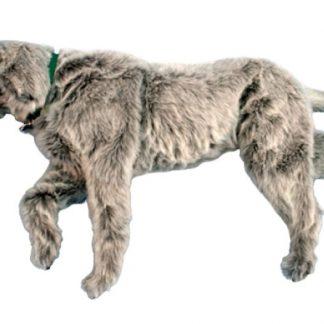 Manekin psa do pozycjonowania