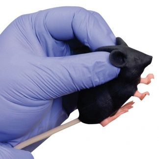 Model myszy