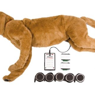 Symulator psa do osłuchiwania serca i płuc