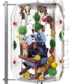 Komórka ludzka w szklanej obudowie